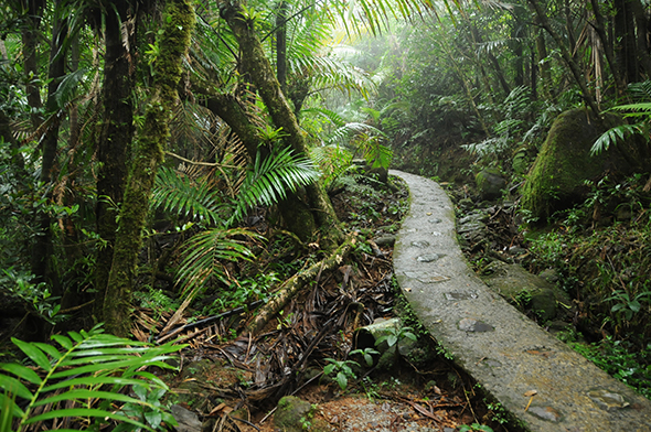 theEl Yunque tropical rain forest in Puerto Rico- Caribbean Forests