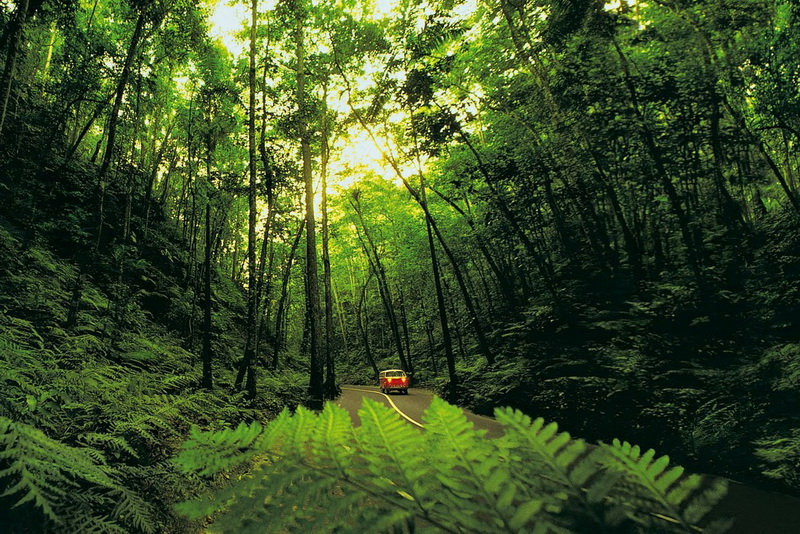The Fern Gully forest in Ocho Rios, Jamaica- Caribbean Forests