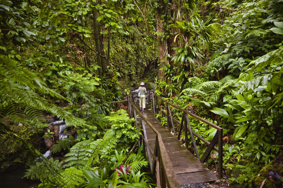 jacko steps to layo river domnica - Caribbean Forests