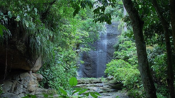 st. lucia beautiful forest - Caribbean Forests